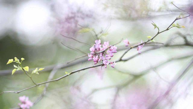 Flowering Thunder